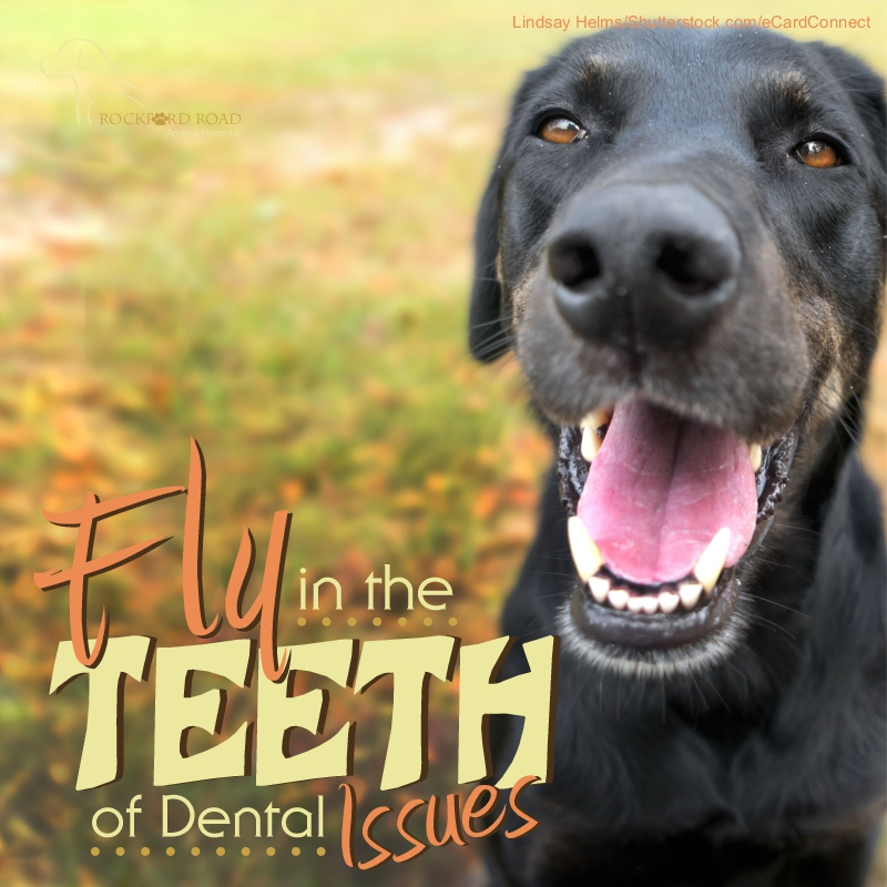 Fly In The Teeth of Dental Issues