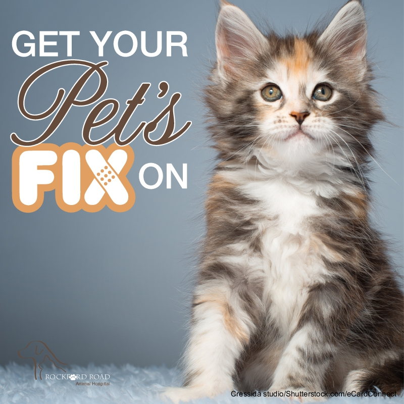 Get Your Pet's Fix On